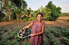 nepal farmer aubergines ccafs